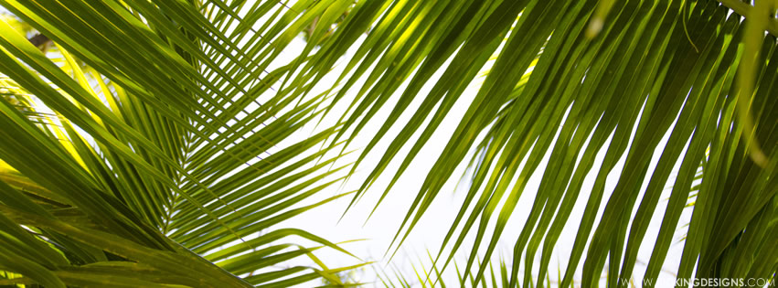 Tropical Leaves 9 17 2015 Wallpaper Background Kicking Designs Choose from 680+ tropical leaf graphic resources and download in the form of png, eps commercial hand painted watercolor wind green leaf plant palm plantain tropical vegetation. tropical leaves 9 17 2015 wallpaper background kicking designs