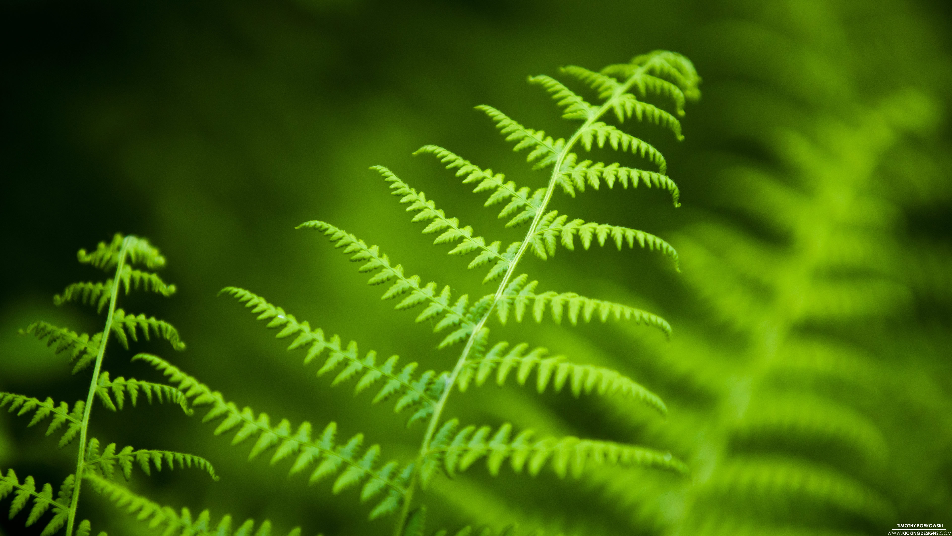 Fern 10 2 2015 Wallpaper Background Kicking Designs