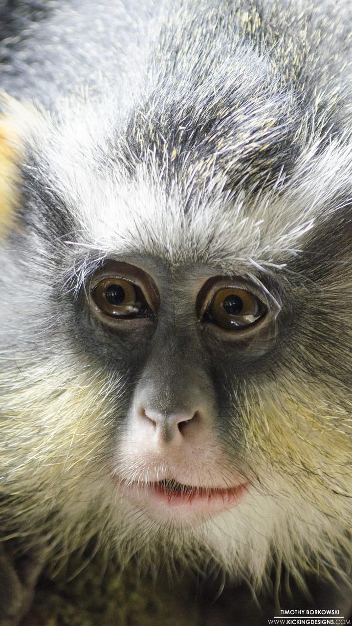 Bronx Zoo Monkey 2 8 2015 Wallpaper Background Kicking
