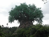 Animal Kingdom Wallpaper