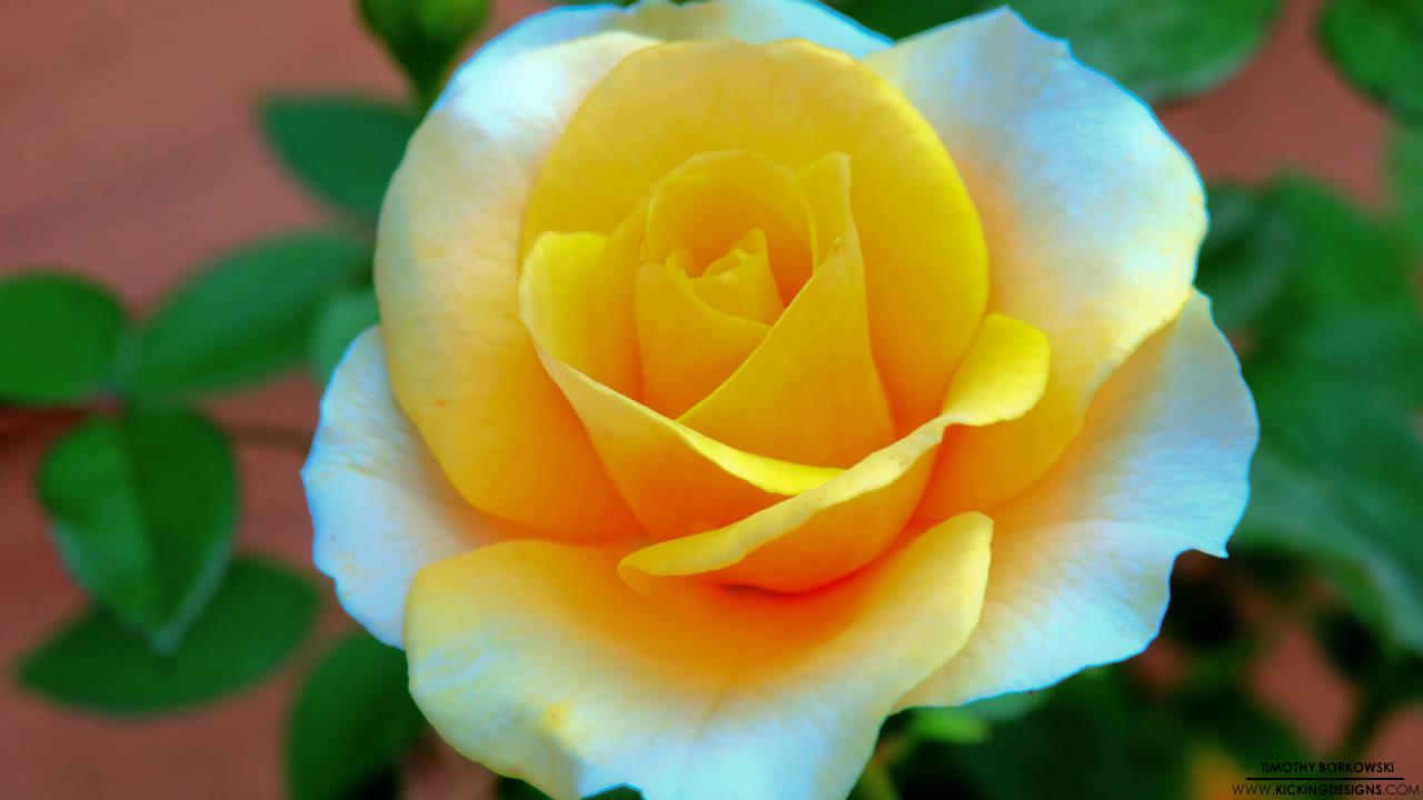 flower-002_hd-720p