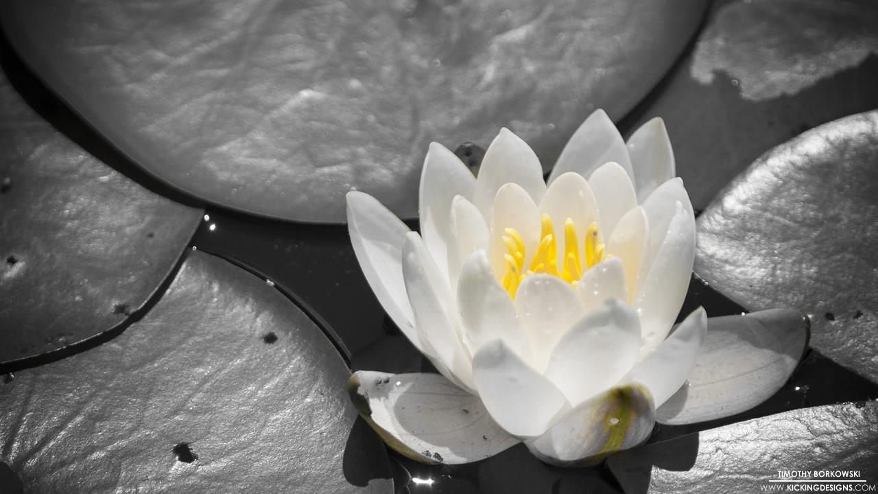 flower-005_hd-720p