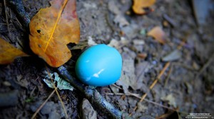 robins-egg-7-26-2012_hd-720p