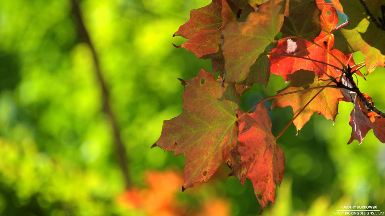 fall-foliage-9-12-2012_hd-720p
