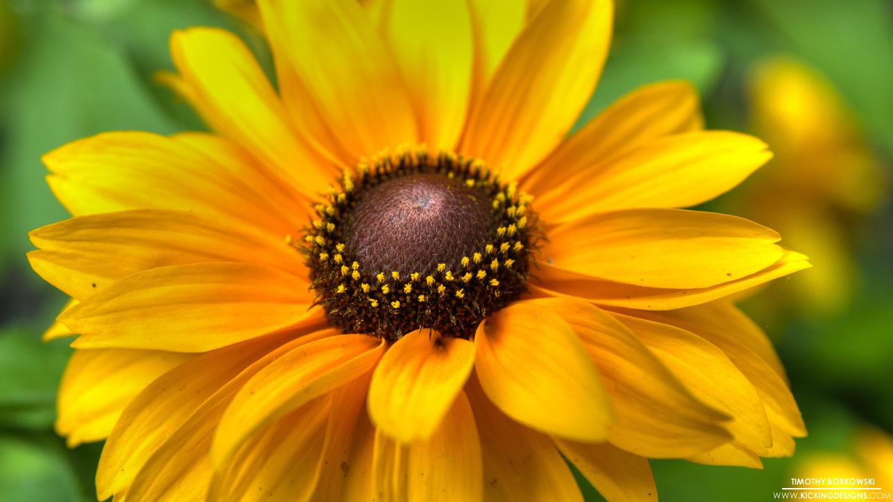 flower-9-9-2012_hd-720p