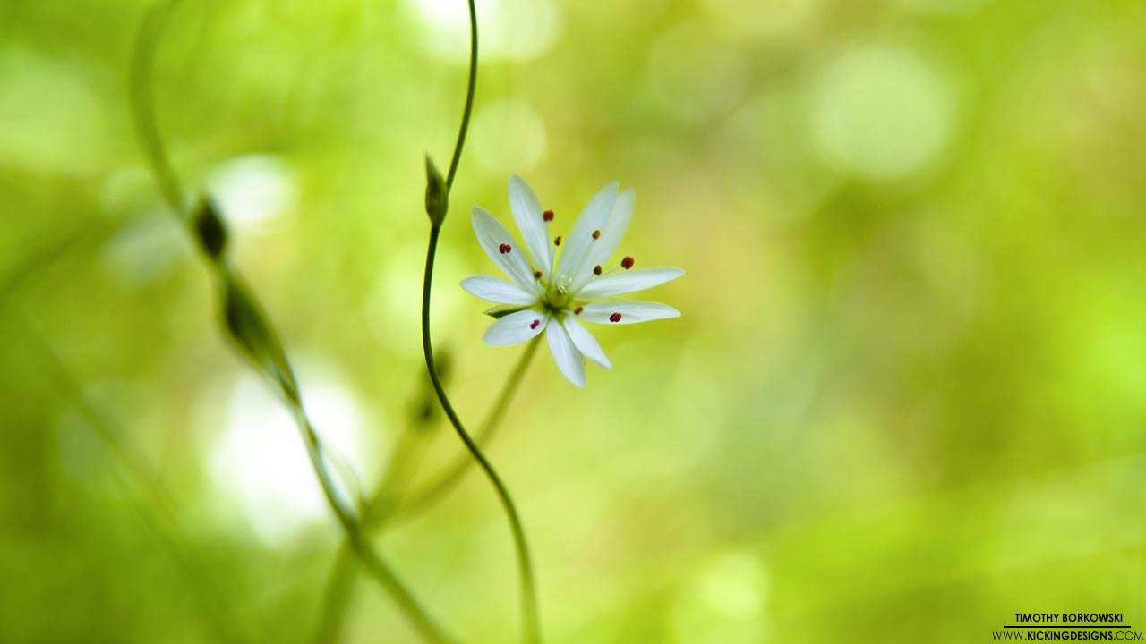 wild-flower-8-28-2012_hd-720p