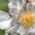 wildflower-7-31-2013_hd-720p