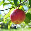 apple-10-8-2013