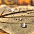 fall-foliage-11-3-2013