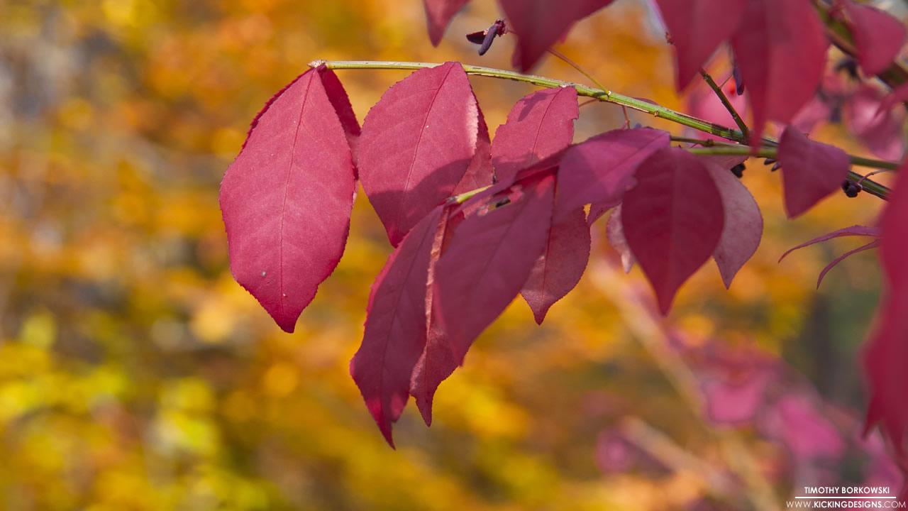 fall-foliage-11-6-2013