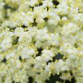 wild-flower-11-9-2013