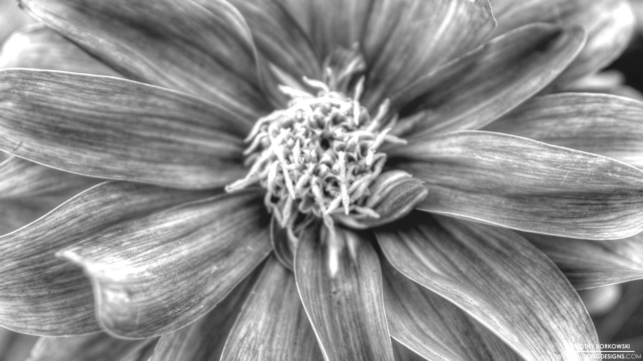 flower-4-24-2014