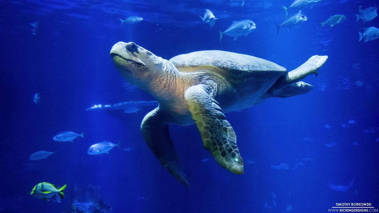 sea-turtle-9-8-2014