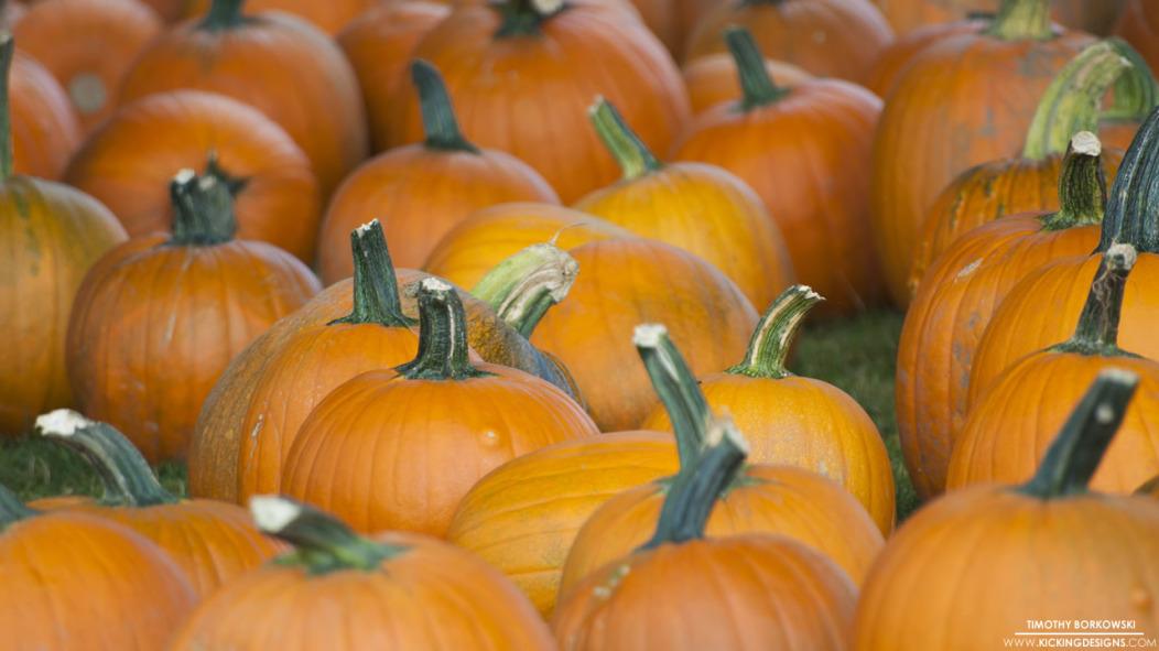 pumpkins-11-3-2014_hd-720p
