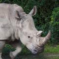 rhinoceros-11-18-2014