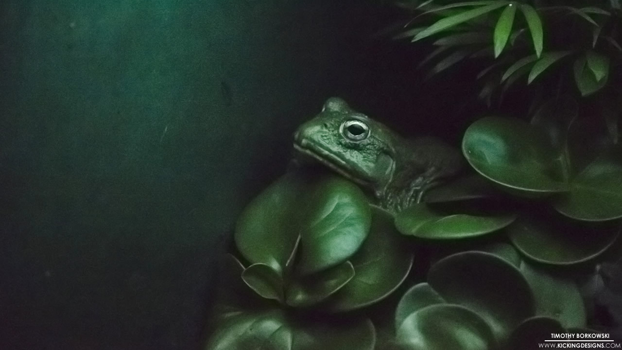 frog-7-1-2015