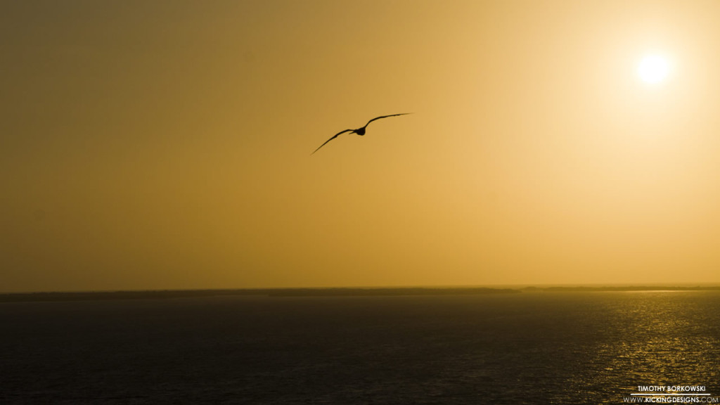 Seagull Sunset 8-11-2015