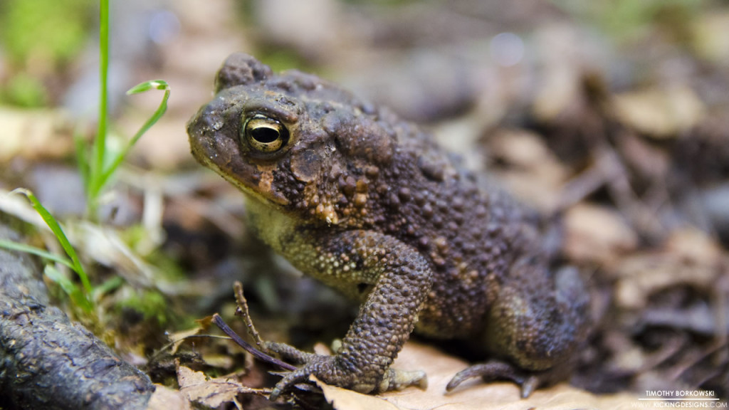 Toad 9-27-2015