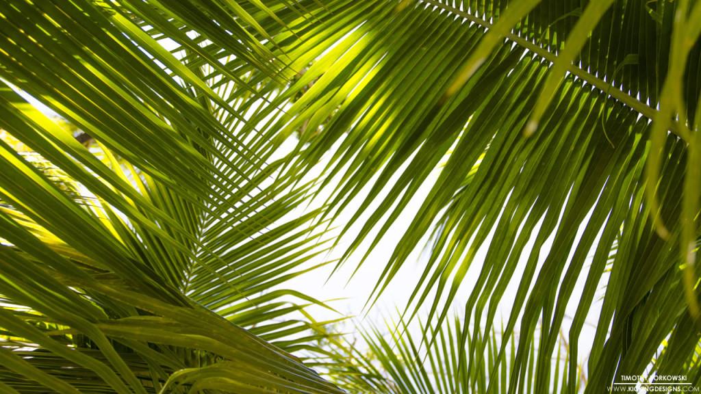 Tropical Leaves 9-17-2015