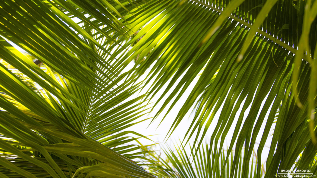 tropical leaves 9