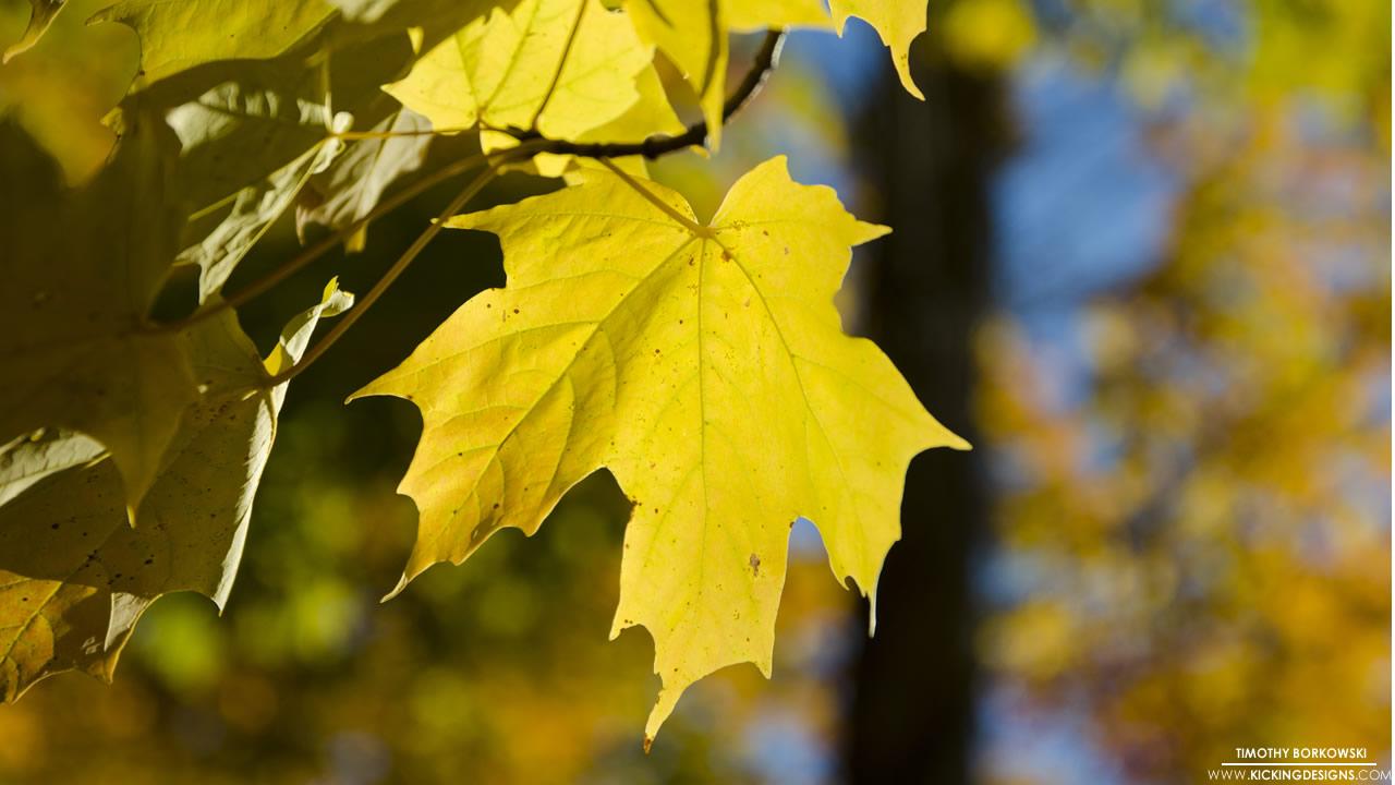 fall-foliage-10-17-2015