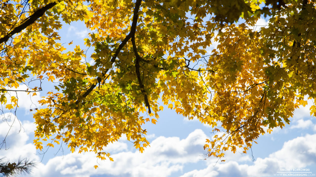 Foliage 11-8-2015