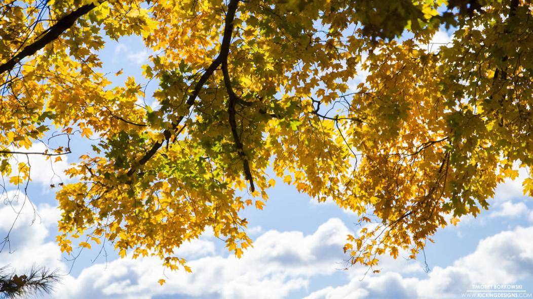 11-8-2015-foliage