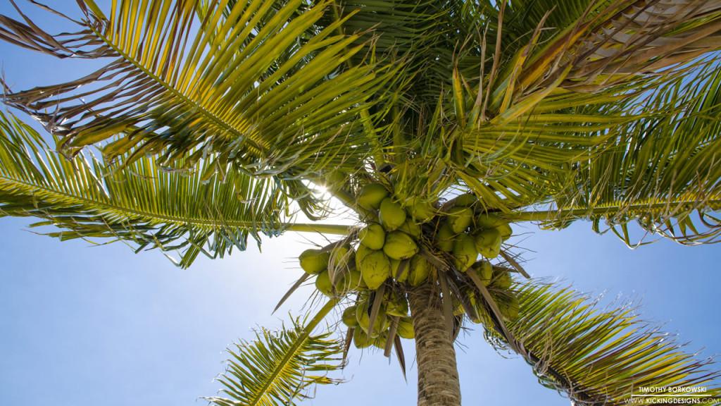Palm Tree 11-13-2015