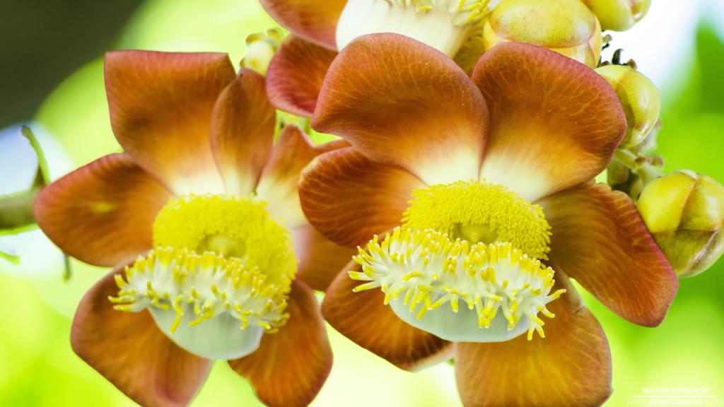 Roatan Flower 11-24-2015