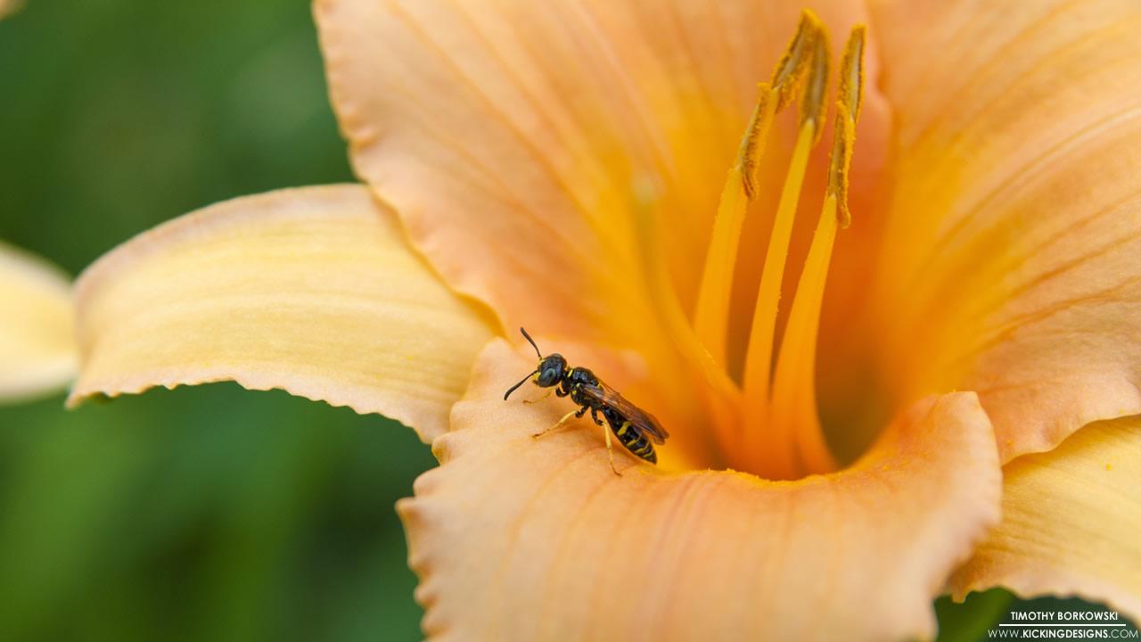 wasp-flower-3-21-2016