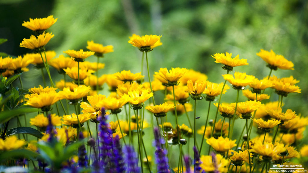 Summer Flowers 6-23-2016